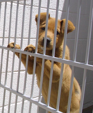 Anti-puppy mill legislation across the country is dogging pet stores
