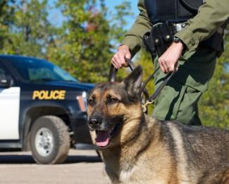 Photo_of_police_dog