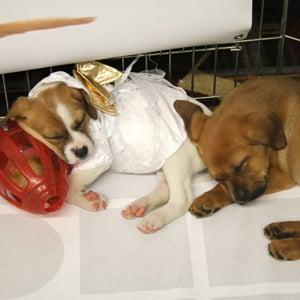 Puppies sleeping in a pen