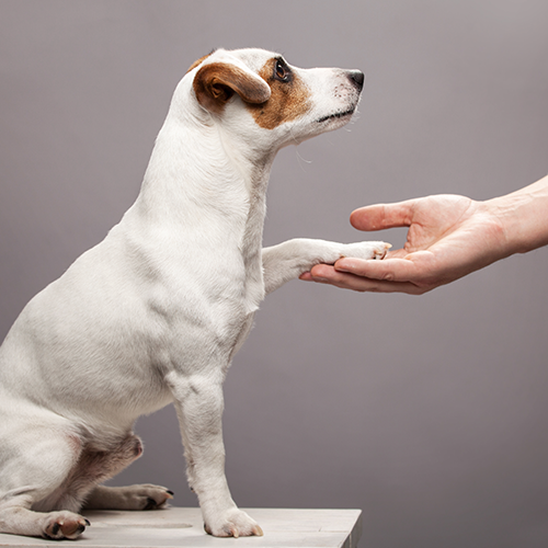 dog holding out its paw for a person's hand