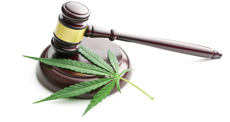 Marijuana leaf and gavel