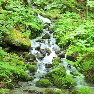 Stream running over rocks