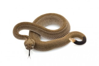 Rattlesnakes add extra oomph to courthouse keep-off-the