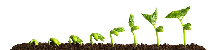 seeds growing in dirt