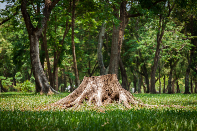 shutterstock_tree stump