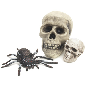 A fake spider and two fake skulls
